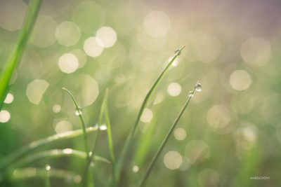 mabel_chow_morning_dew