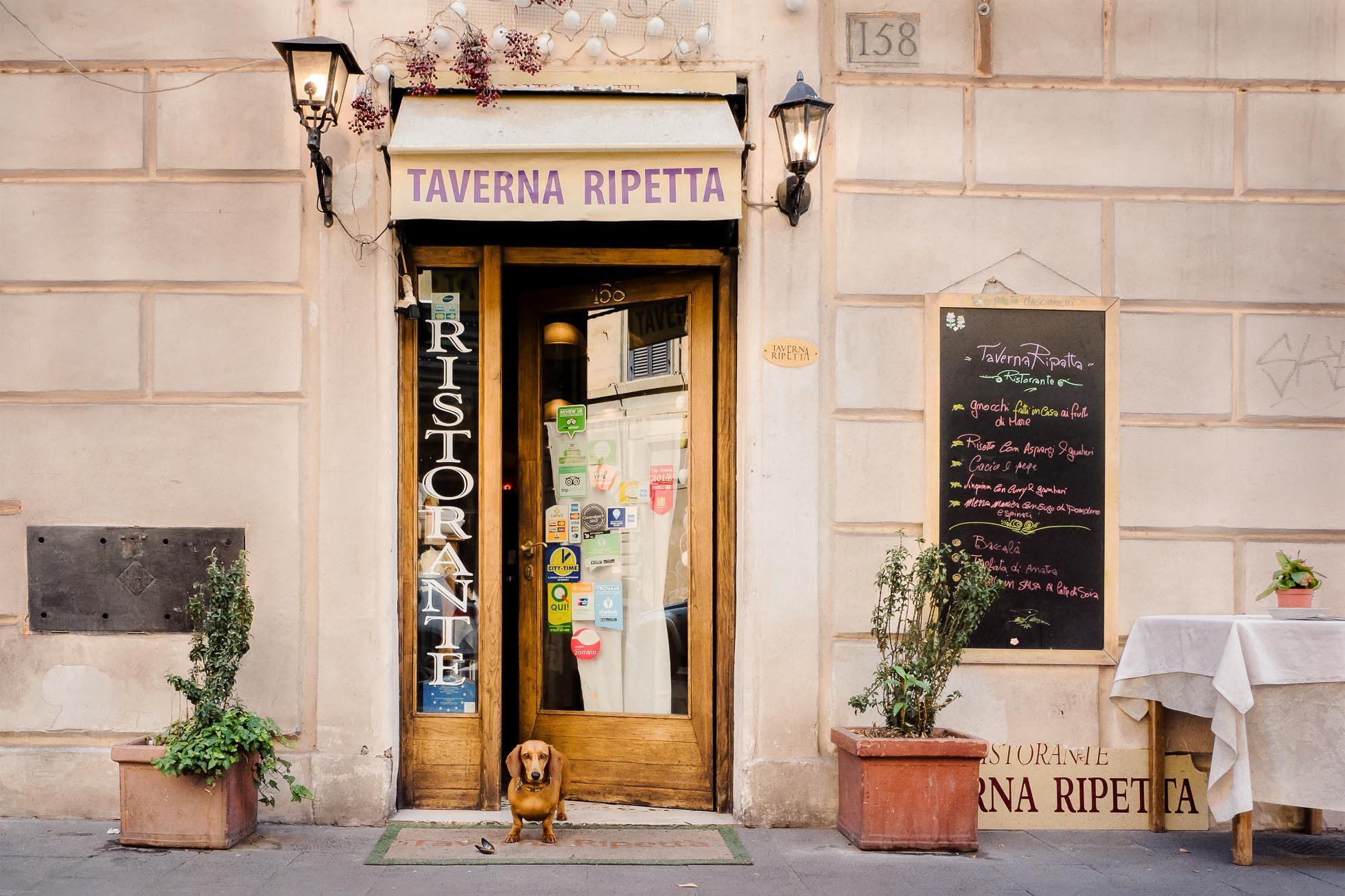 sallyannfield-restaurant-rome-italy-dog-travel-photography
