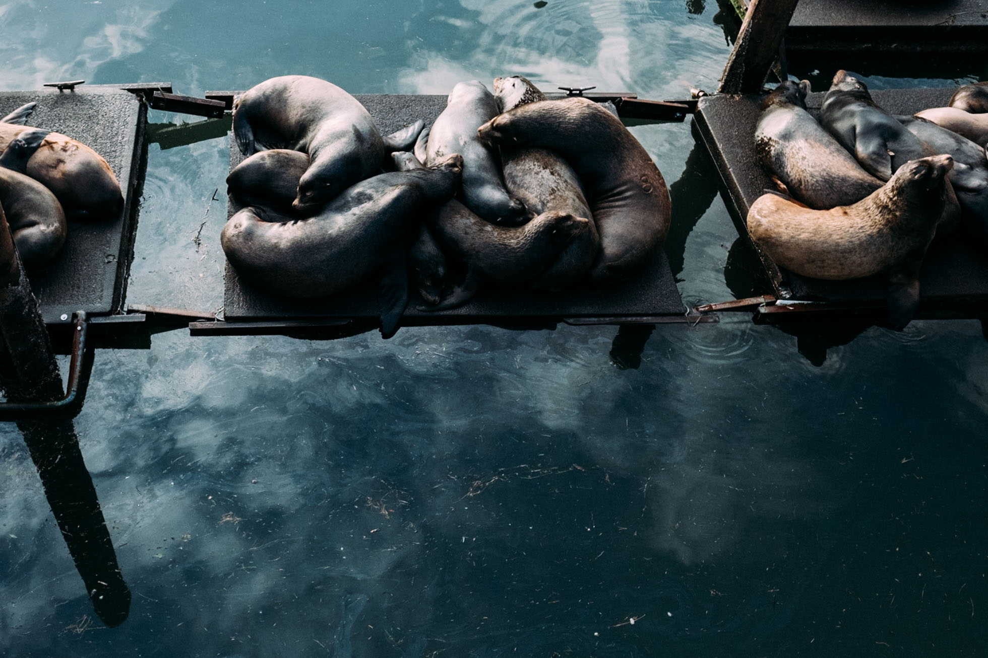 Sealions on the docks of newport oregon coast water