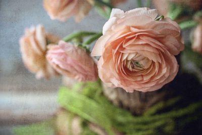 rose-still-life