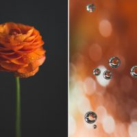 Orange-Diptych-by-Photographer-Diane-Wittenberg