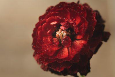 06.04.19 Beauty in Red