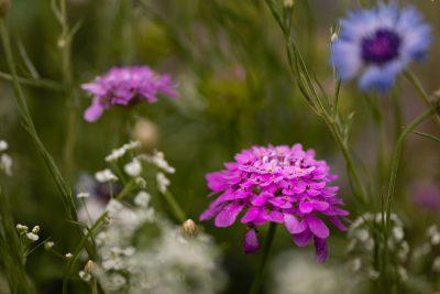 Garden-Treasures-©Nadeen-Flynn-Photography