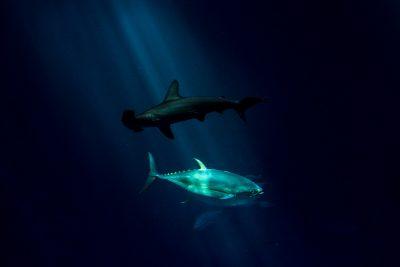Monterey Bay Aquarium © Jennifer Carr Photography-1
