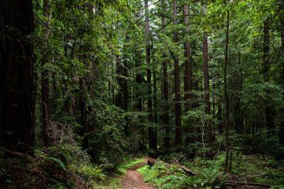 Portola Redwoods State Park © Jennifer Carr Photography-17