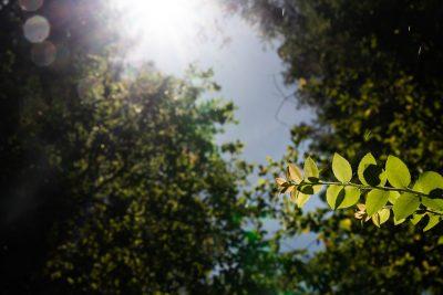 Portola Redwoods State Park © Jennifer Carr Photography-24