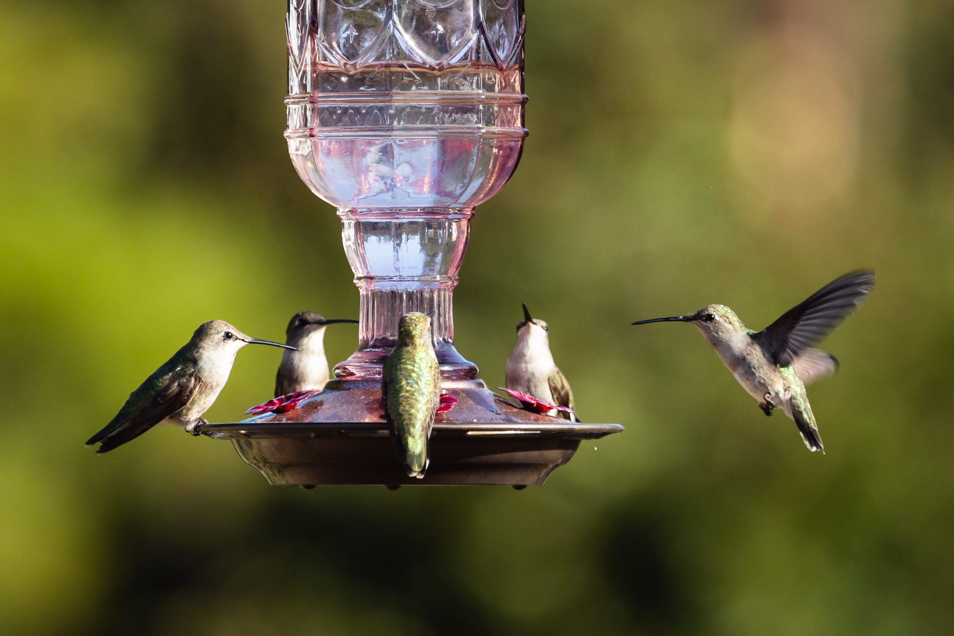 At-the-Feeder-©Nadeen-Flynn-Photography