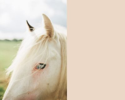201907-ireland-horse-web-
