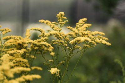 2018.07.23 Salt Farm Flowers Trenton Maine © Jennifer Carr Photography Virginia Beach -3