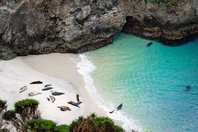 Point Lobos State Reserve © Jennifer Carr Photography-25