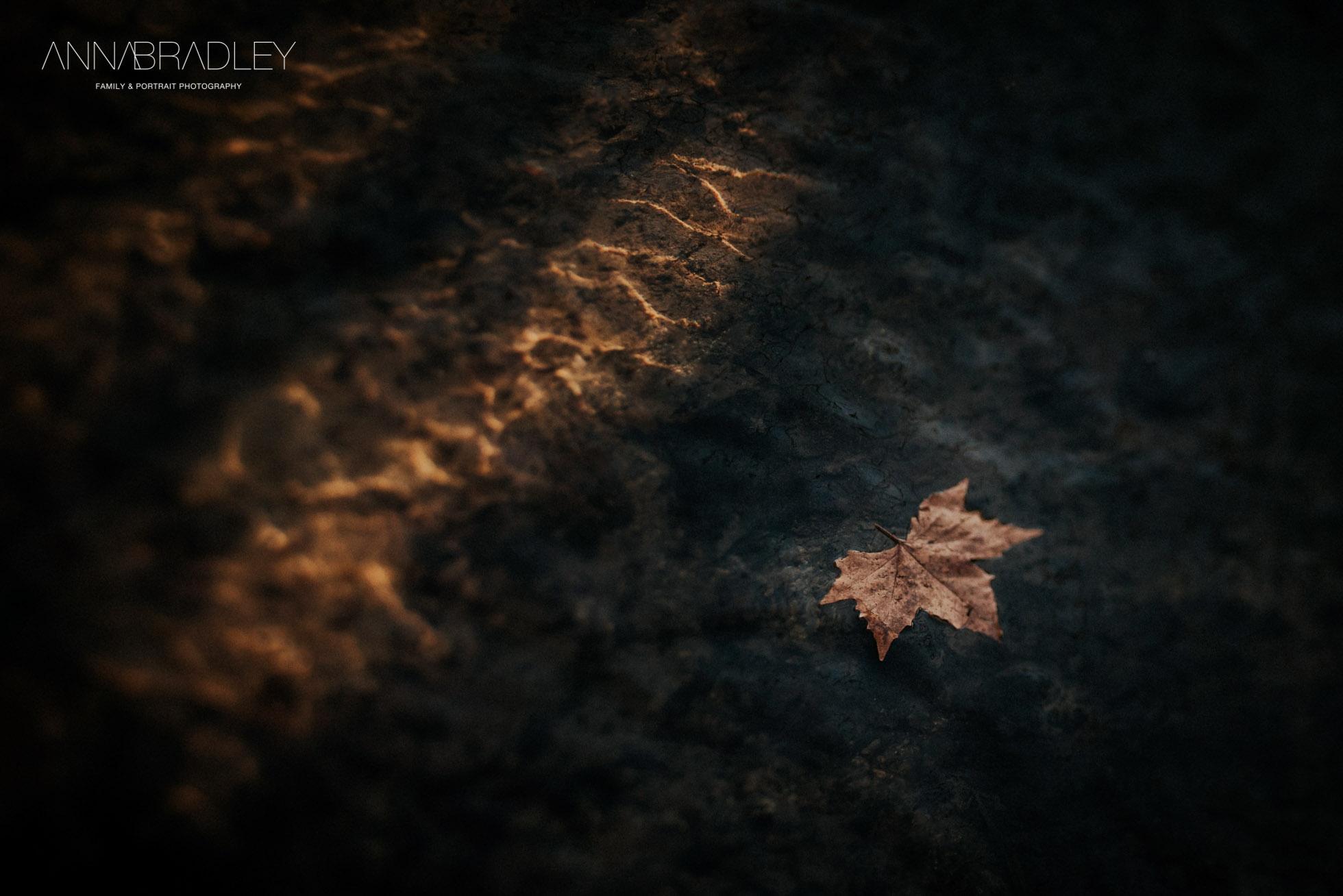 Drifting fine art photograph leaf on water Anna Bradley