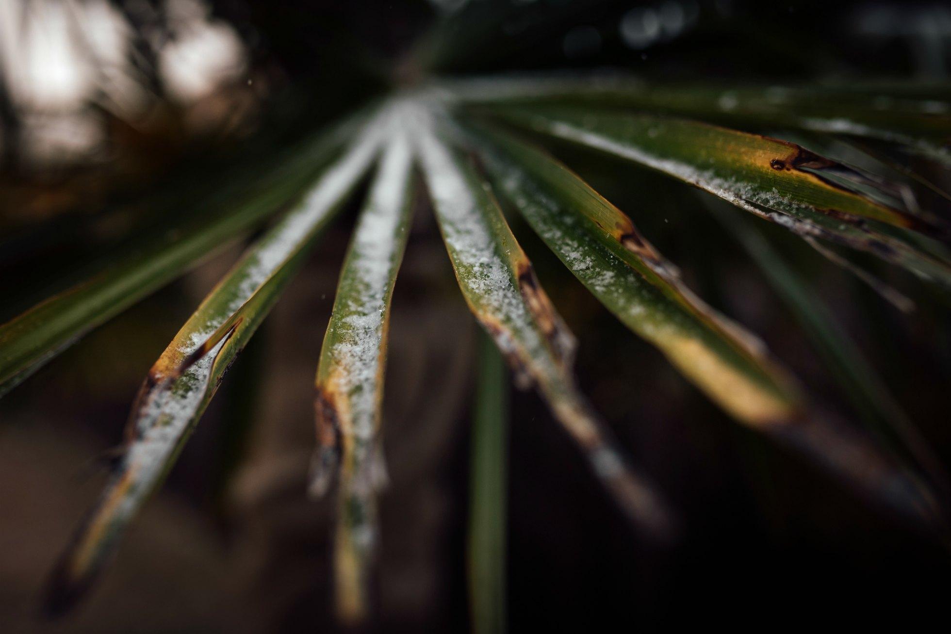 juxtapose winter shot