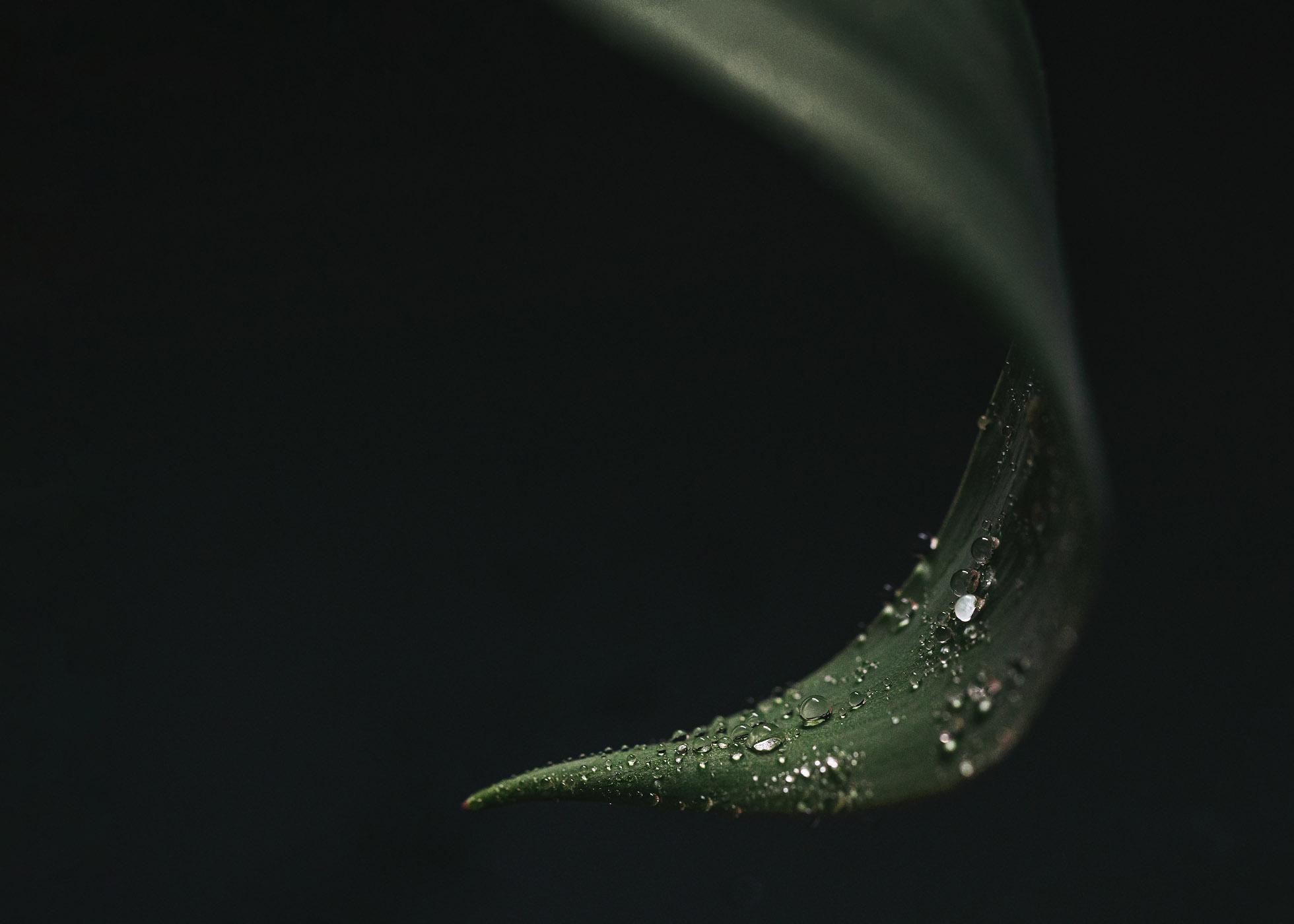 April-Showers-1