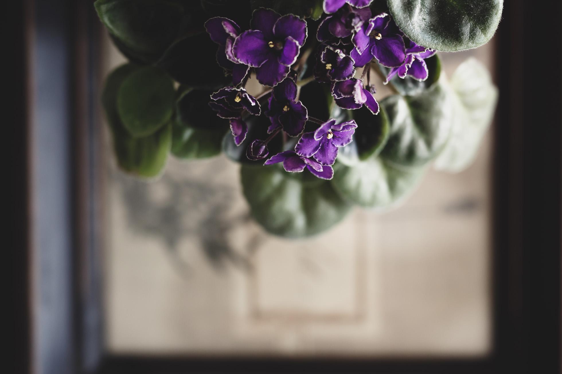 *African-Violet-S-©Nadeen-Flynn-Photography