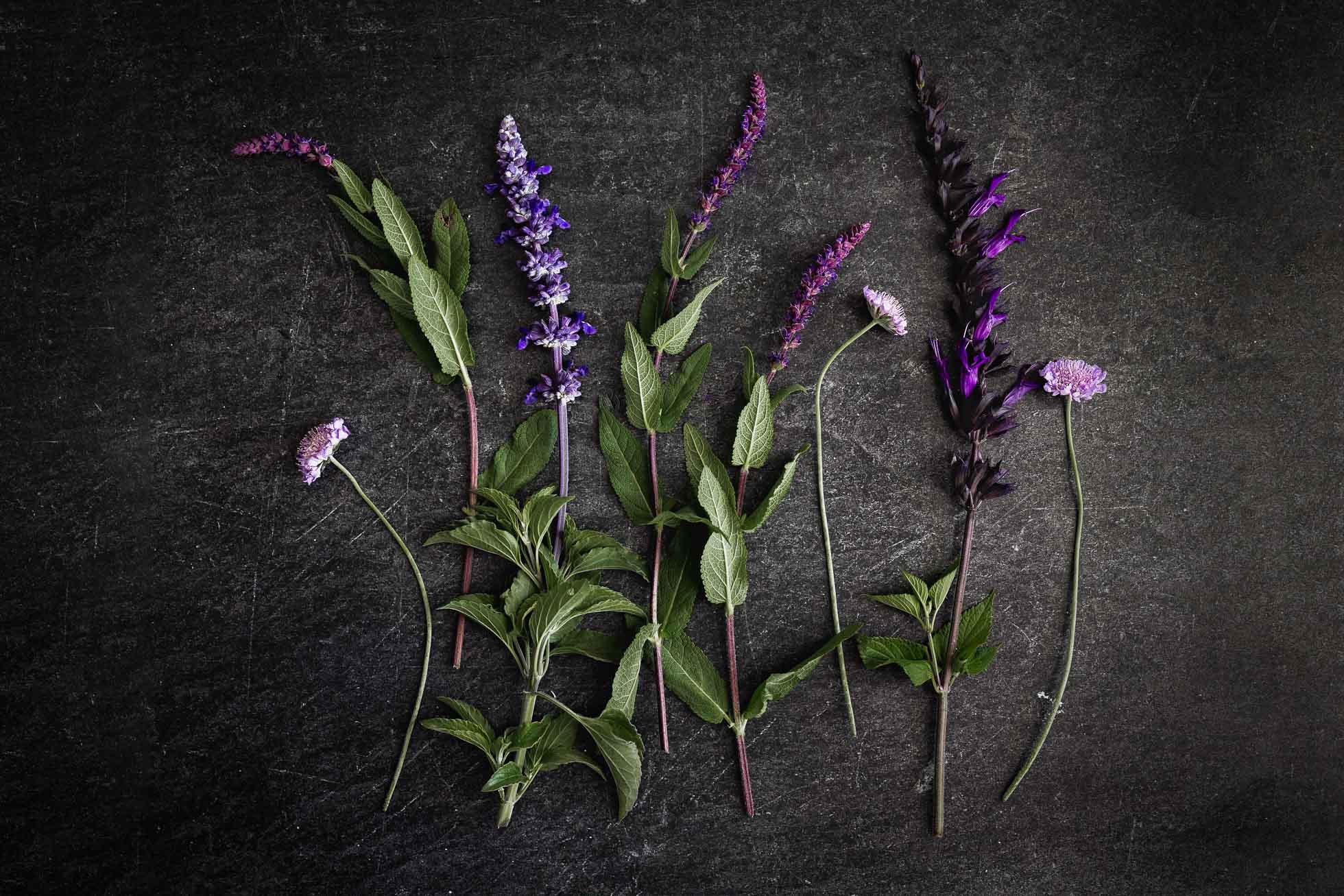 *Purple-©Nadeen-Flynn-Photography