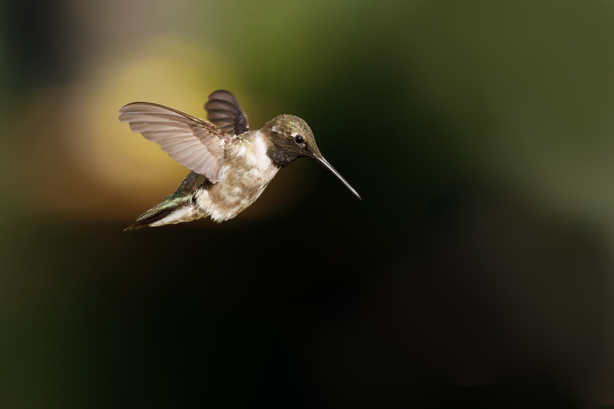 Hovering-©Nadeen-Flynn-Photography-4c06323e