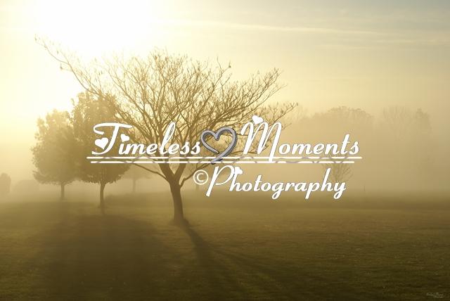 Portfolio Image #2